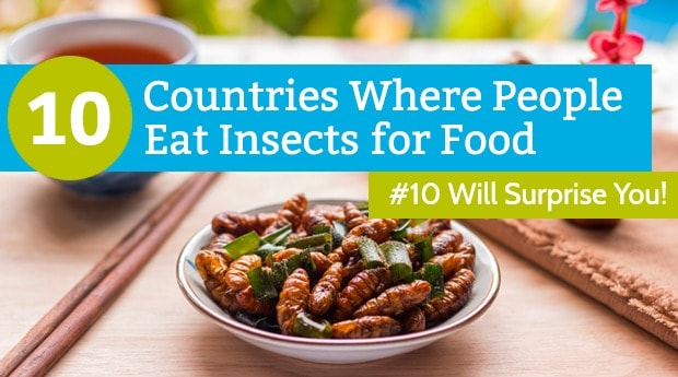 10 Countries Where People Eat Insects for Food (#10 Will Surprise You)